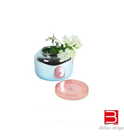 Pulpo Low Vaso Container metallico